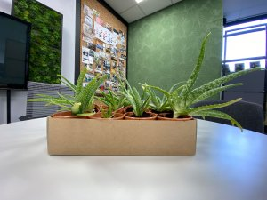 What is the best plant for my office